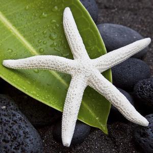 White Starfish on Green Leaf by Uwe Merkel
