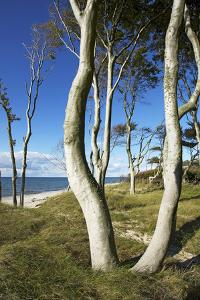 Beech Trunks on the Western Beach of Darss Peninsula by Uwe Steffens