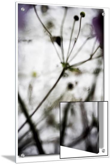 V?g?tal / 4174, c.2008-Laetizia Bazzoni-Art on Acrylic