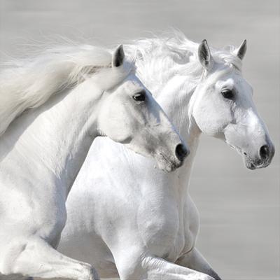 Winter Gallop (detail)