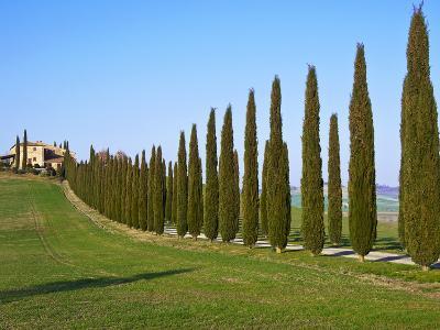 Val D'Orcia, Siena Province, Siena, Tuscany, Italy, Europe-Nico Tondini-Photographic Print
