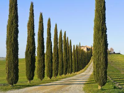 Val D'Orcia, Siena Province, Siena, Tuscany, Italy-Nico Tondini-Photographic Print