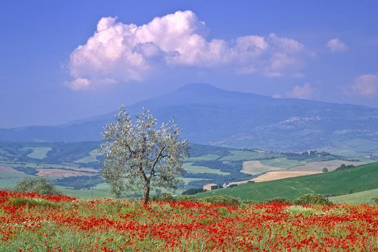 Val D'orcia Tuscany Itlay-Kathy Collins-Photographic Print