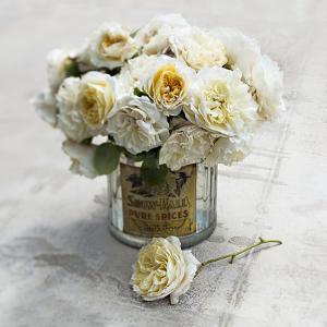 An English Rose by Valda Bailey