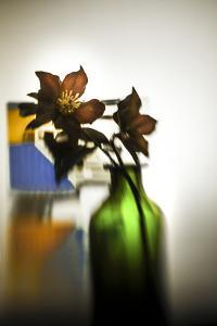The Christmas Rose by Valda Bailey