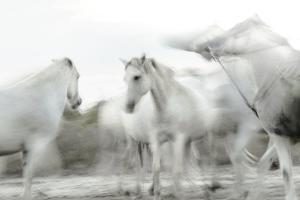White Spirit by Valda Bailey