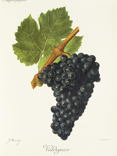 Valdiguier Grape-J. Troncy-Giclee Print