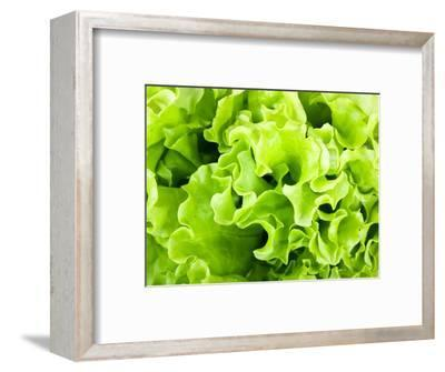 Fresh Green Lettuce Salad