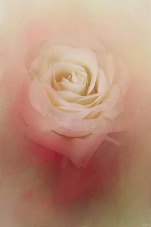 https://imgc.artprintimages.com/img/print/valentine-rose_u-l-pu0oa30.jpg?p=0