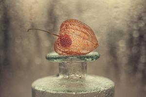 Untitled by Valeriya Tikhonova