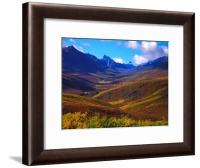Valley Blooms with Autumn Colors, Tombstone Territorial Park, Yukon Territory, Canada-Nick Norman-Framed Photographic Print