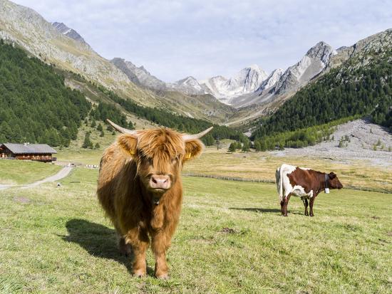 Valley Pfossental, Tyrol, Austria-Martin Zwick-Photographic Print