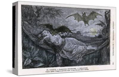 Vampire Bat Bites the Neck of a Sleeping Girl in as Hammock
