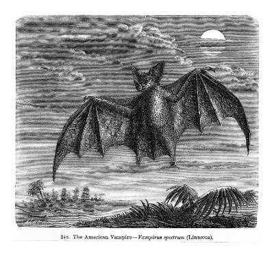 Vampire Bat--Giclee Print