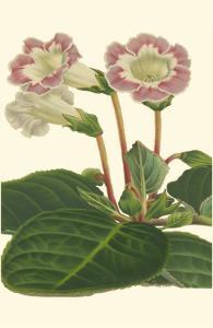 Gloxinia Garden II by Van Houtt