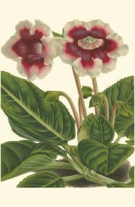 Gloxinia Garden III by Van Houtt