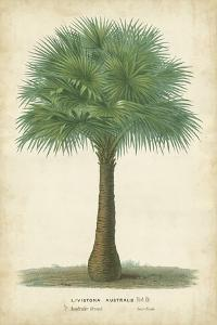 Palm of the Tropics I by Van Houtteano