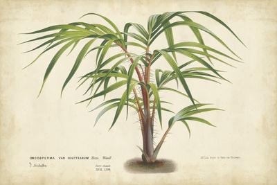 Palm of the Tropics VI