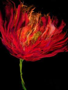 Red Tulips I by Vanessa Austin