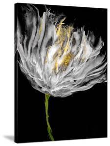 Tulips on Black I by Vanessa Austin