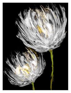 Tulips on Black II by Vanessa Austin