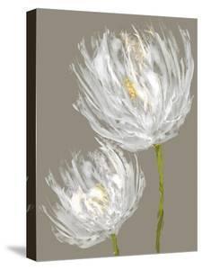 White Tulips II by Vanessa Austin