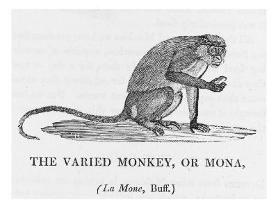 Varied Monkey--Giclee Print