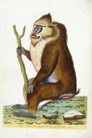 https://imgc.artprintimages.com/img/print/variegated-baboon-or-mandrill-mandrillus-sphinx_u-l-ppgzg50.jpg?p=0