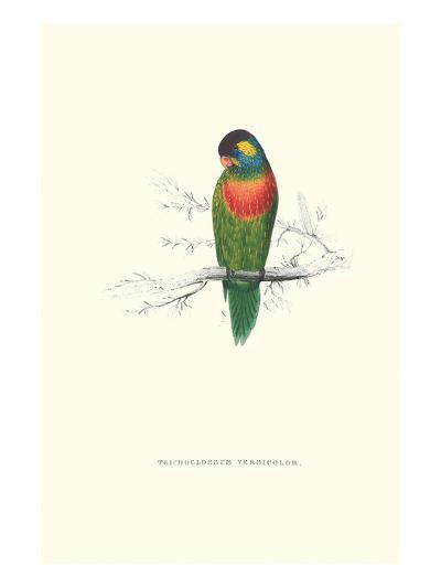 Variegated Parakeet - Trichoglossus Versicolor-Edward Lear-Art Print