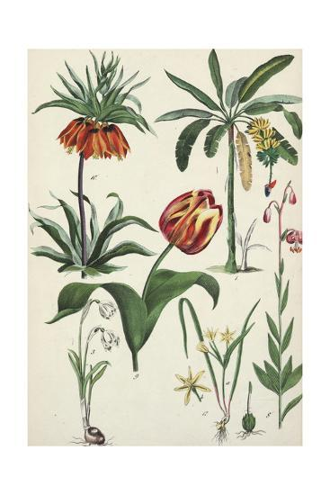 Variegated Tulip with Other Flowering Plants--Art Print