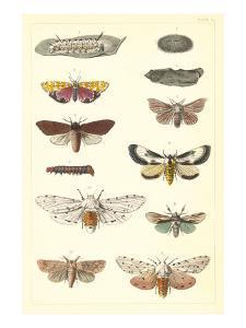 Varieties of Moth
