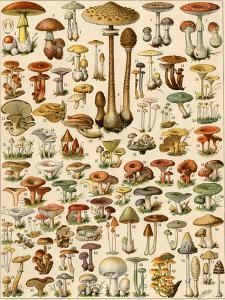 Varieties of Mushrooms
