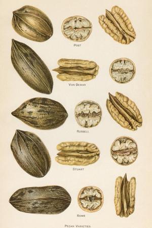 Varieties of Pecans
