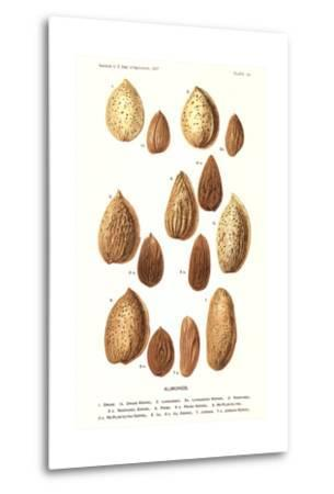 Variety of Almonds
