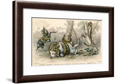 Variety of Snakes--Framed Giclee Print