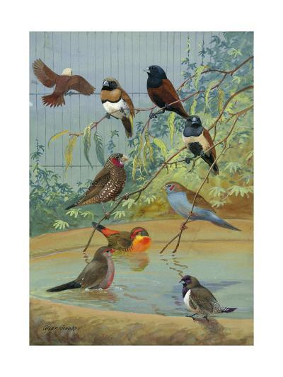 Various Birds Rest in a Birdbath and on Branches That Hang Above-Allan Brooks-Photographic Print