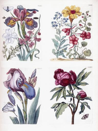 Various European Insects and Flowers-Maria Sibylla Graff Merian-Giclee Print