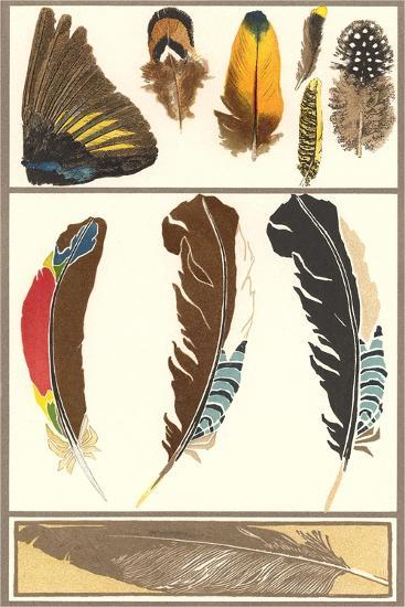 Various Feathers--Art Print