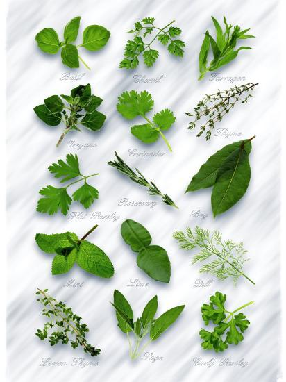 Various Herbs on Marble-Peter Howard Smith-Photographic Print