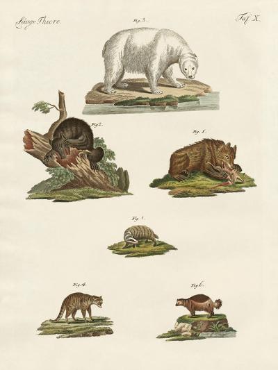Various Kinds of Bears--Giclee Print