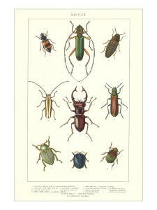 Various Kinds of Beetles