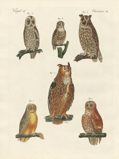 Various Kinds of Owls--Giclee Print