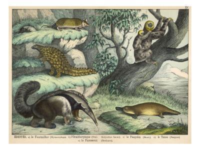 https://imgc.artprintimages.com/img/print/various-quadrupeds-giant-anteater-brown-platypus-pangolin-armadillo-and-three-toed-sloth_u-l-p9y9i50.jpg?p=0