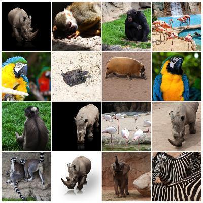Various Wild Animals Composition-Aaron Amat-Photographic Print