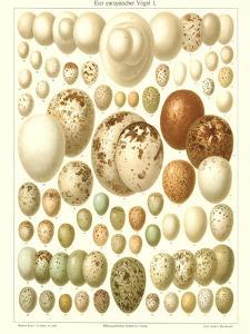 Varriety of Eggs