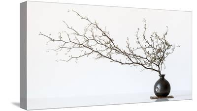 Vase And Branch--Stretched Canvas Print