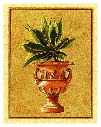 Vase M?dicis II-Laurence David-Art Print