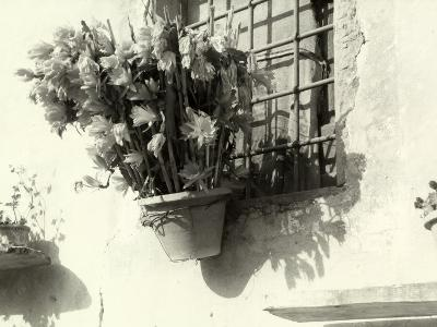 Vase with Flowers Hanging from the Window of an Old House-Vincenzo Balocchi-Photographic Print