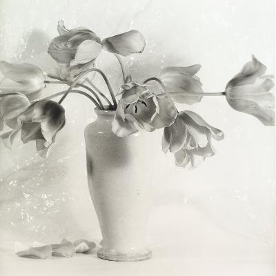 Vase with Tulips-Vincenzo Balocchi-Photographic Print