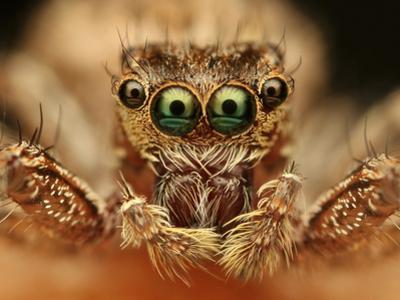 Spider by vasekk